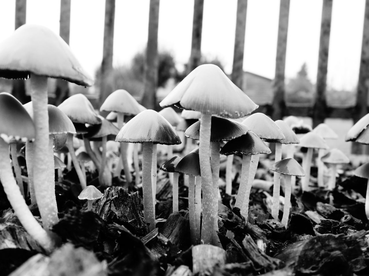 Beauty In Nature Close-up Day Freshness Mushroom Mushrooms Mushrooms Army Nature No People Outdoors