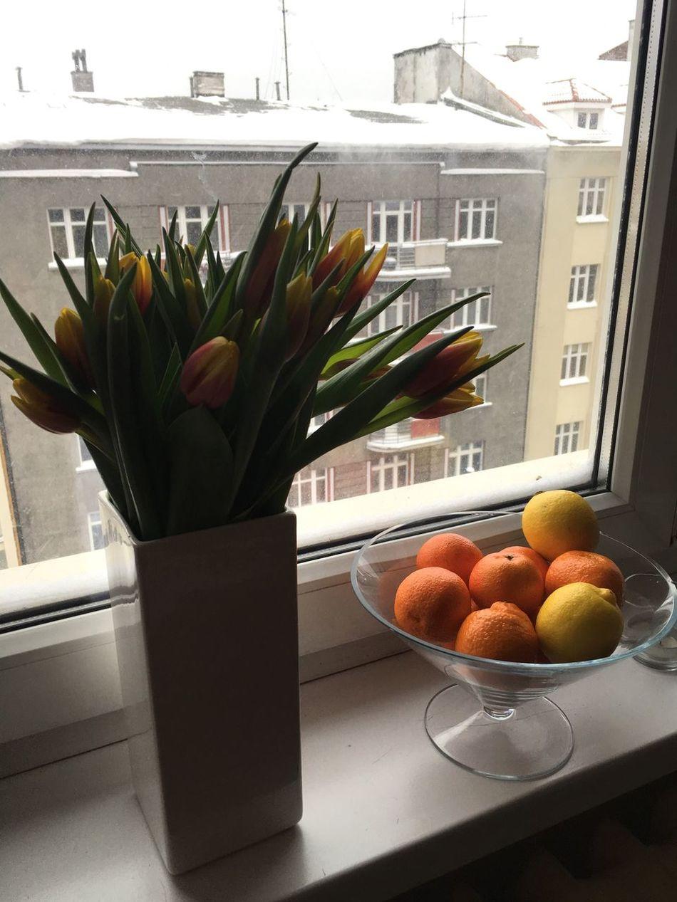 Indoors  No People Freshness Window Flower Tulip Domestic Room Home Interior Day Gdynia Kwiaty Kwiaty_już_rosną! Kwiatypolne Kwiaty świata Kwiatywwazonie Kwiaty Polne (null) Tulipany Mandarin Oranges mandarynki