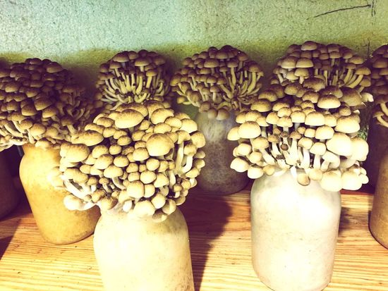 Shimeji しめじ Food Mushrooms