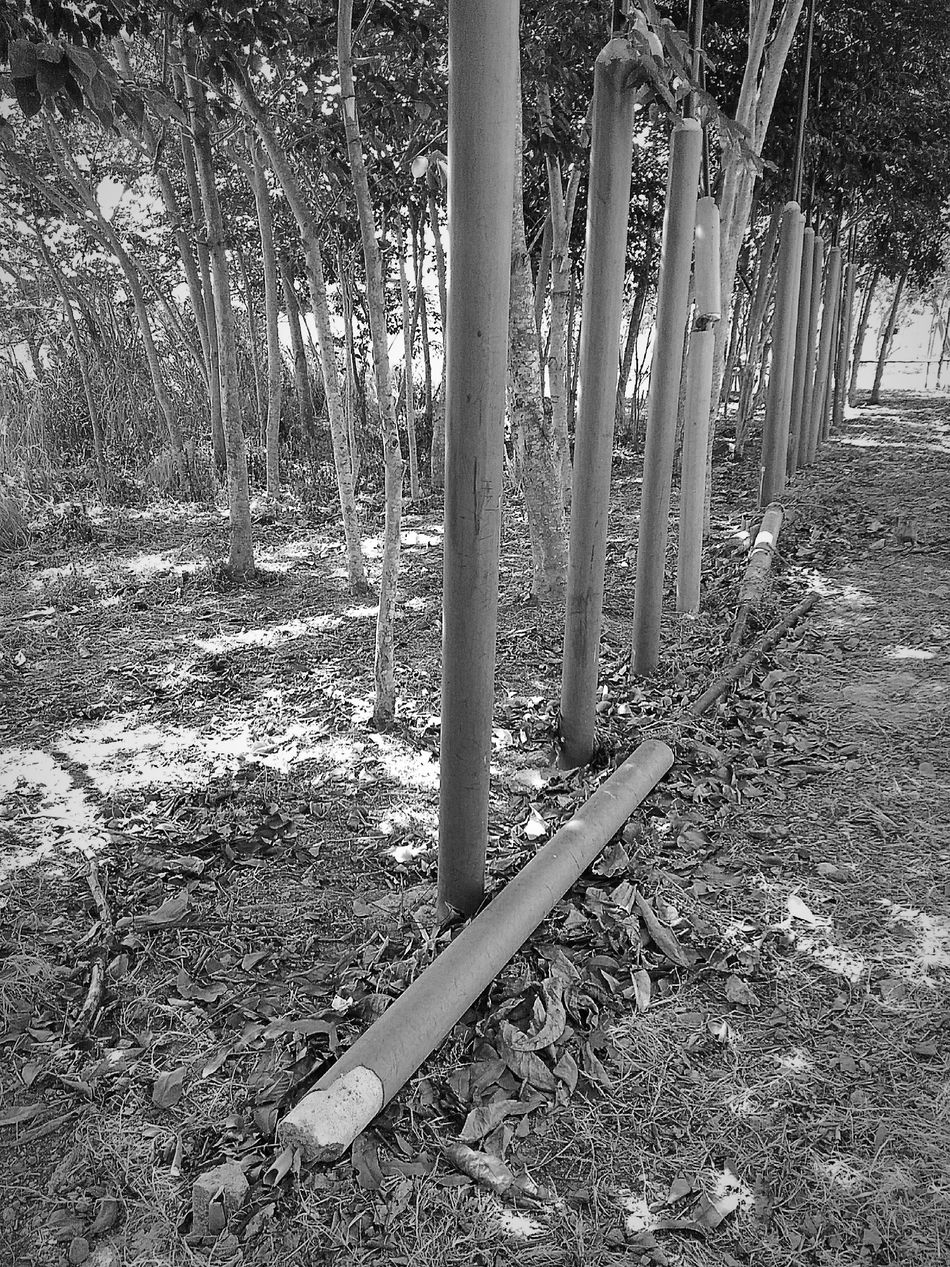 Black And White My Attempt To Photography Post The Fallen One Zenfone2laser Leaves zenfone photography