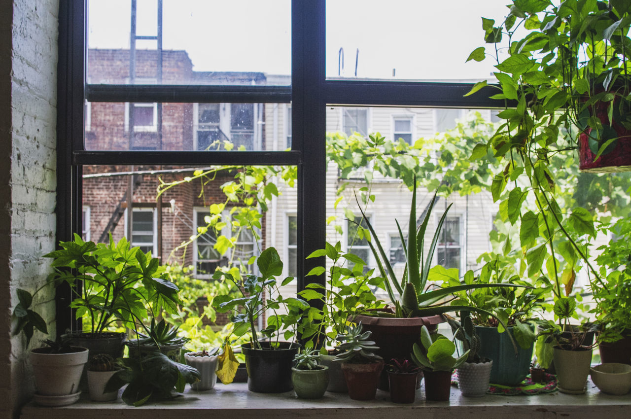 Architecture Balcony Building Built Structure City Day Flower Flower Pot Front Or Back Yard Gardening Green Color Growing Growth Indoor Photography Indoor Plants Leaf Nature No People Plant Potted Plant Potted Plants Residential Building Residential Structure Sky Window Sill