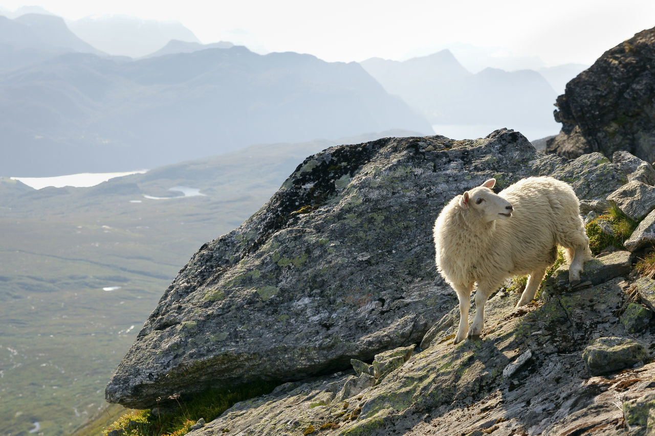 Beautiful stock photos of norway, Animal Themes, Beauty In Nature, Cliff, Day