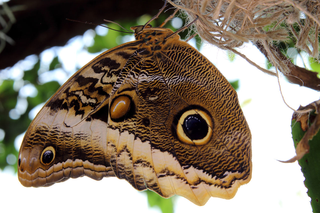 Animal Butterfly Butterfly - Insect Butterfly Macro Butterfly Photo Butterfly Wings Insect Insect Macrophotography