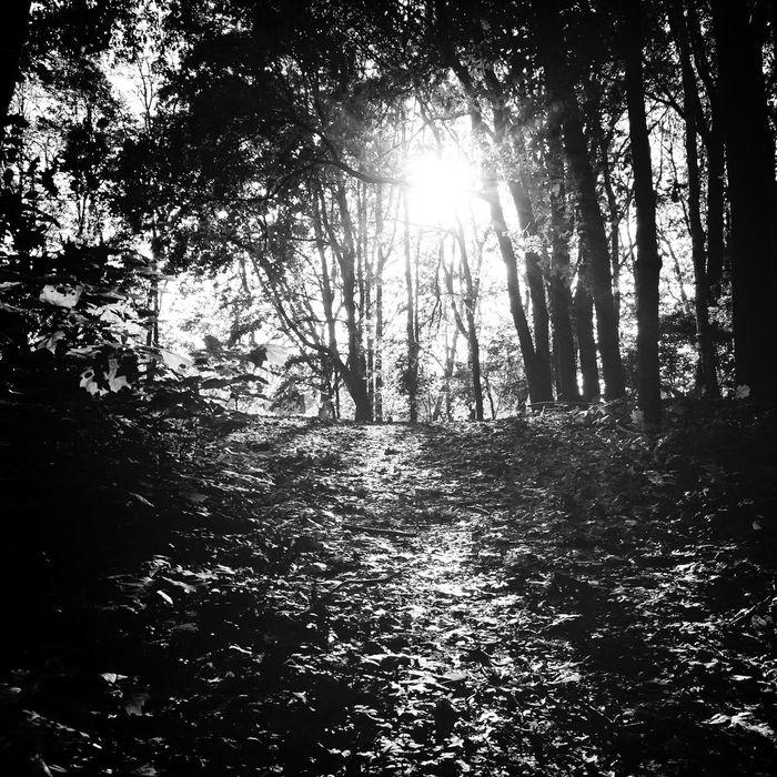 Walk Bw Forest Sun #morning