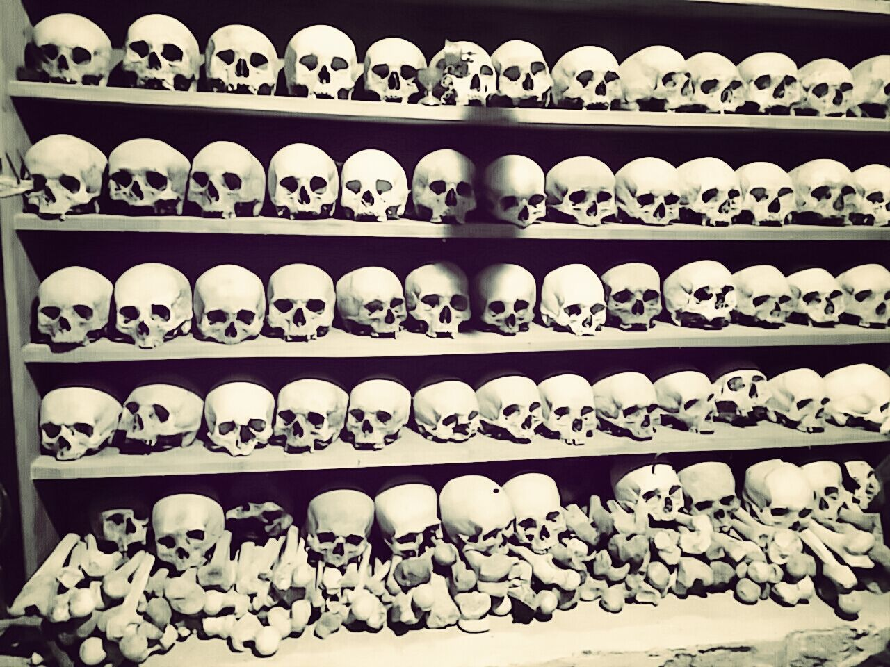 Beautiful stock photos of skull, Conformity, Crypt, Death, History