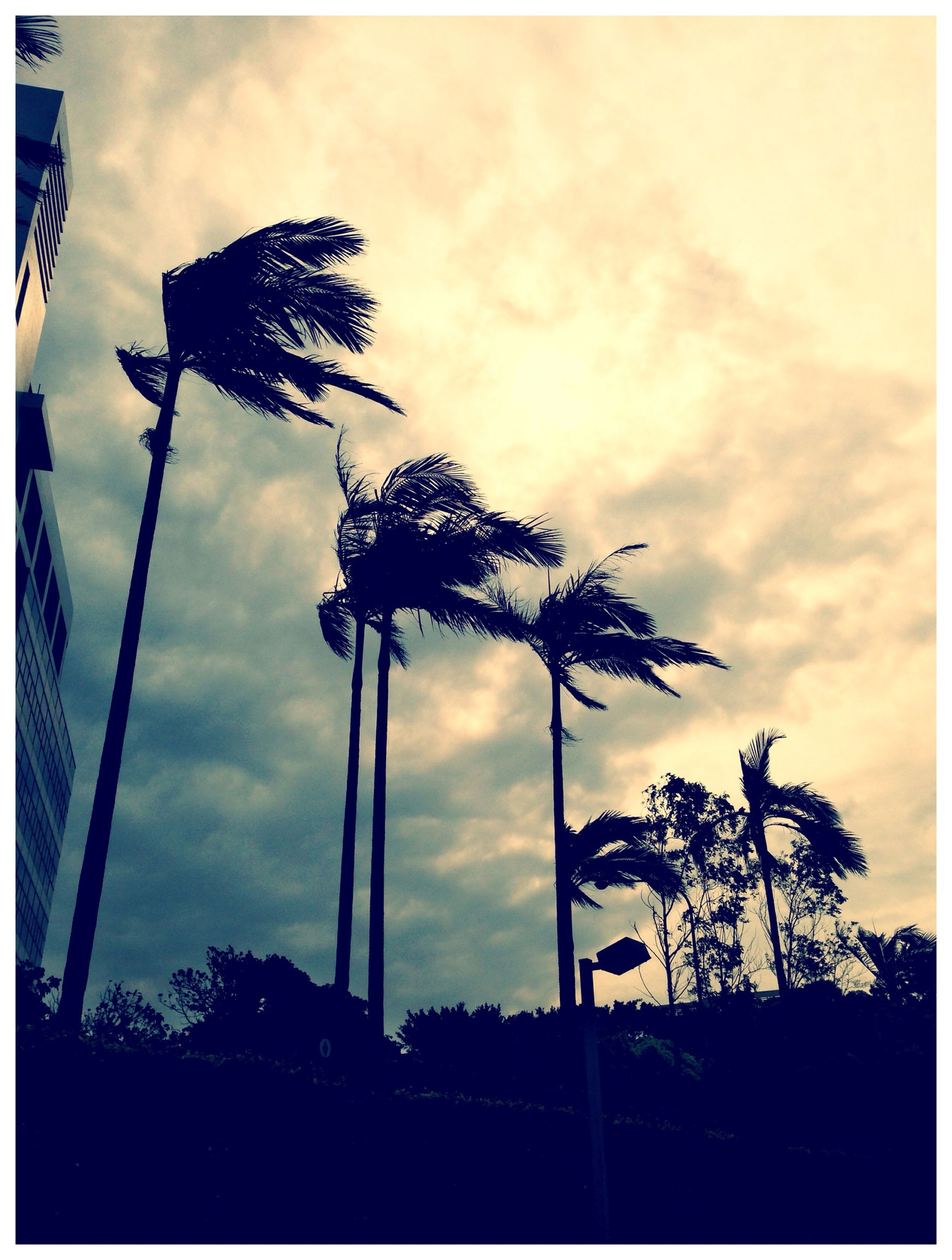 silhouette, tree, sky, low angle view, transfer print, sunset, cloud - sky, palm tree, auto post production filter, growth, cloudy, tranquility, nature, cloud, dusk, beauty in nature, no people, outdoors, scenics, tranquil scene