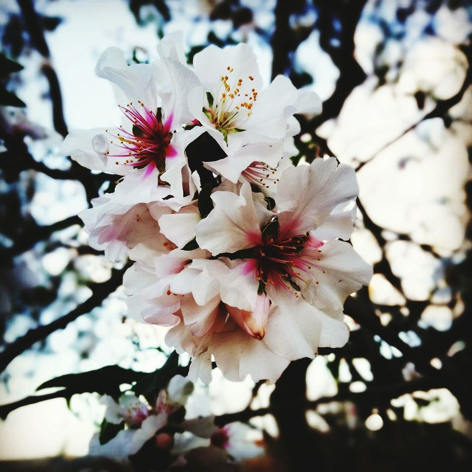 Flower Growth Nature Beauty In Nature Plant Springtime Freshness Day