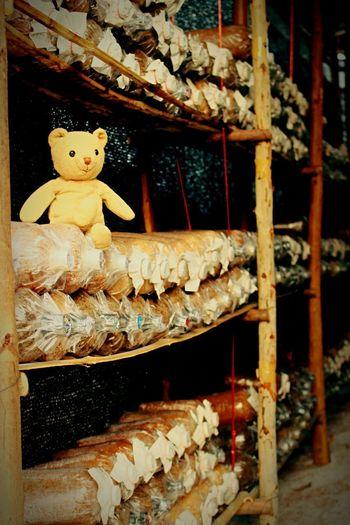 My mhee and the mushrooms farm...^^ My Bear Story Mymheegoeverwheres Mybear Mushrooms Mushroom Mushrooms 🍄🍄 Mushroom Farm Check This Out Farm Taking Photos EyeEm Best Shots EyeEm Best Edits EyeEm Nature Lover