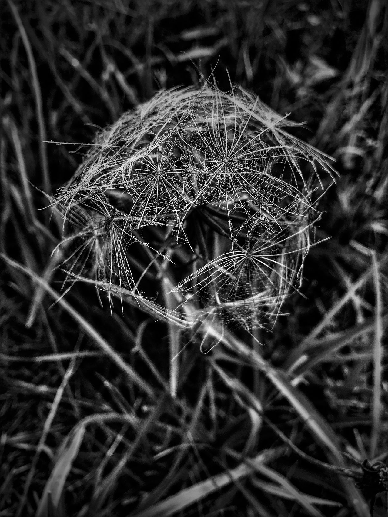 AMPt - My Perspective Abstractions Blackandwhite Eye4photography  Black And White Abstract Photography Abstract Nature Blackandwhite Photography Nature Porn Shapes In Nature  Nature_collection Black & White Make A Wish Make A Wish ! EyeEm Exploring Nature_collection Textures And Surfaces