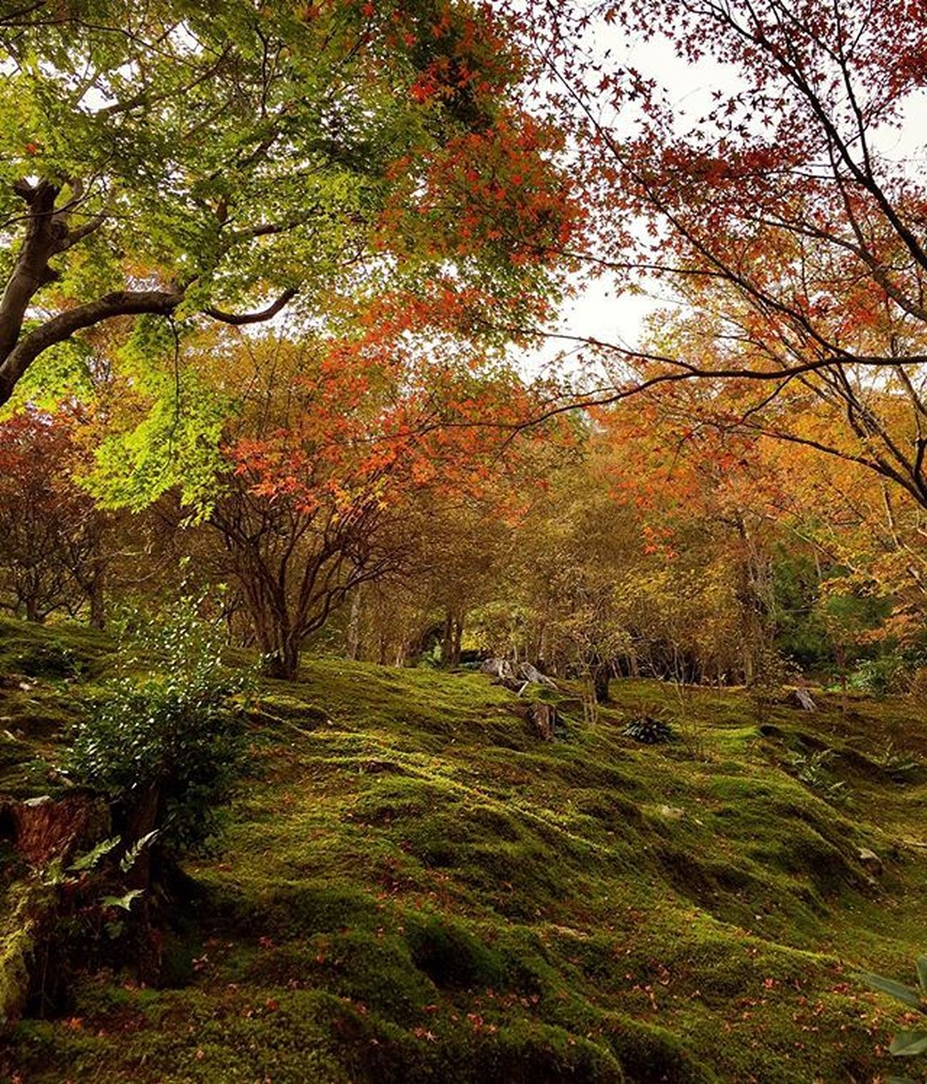 The grounds of Tenryu-ji Temple .. ✌🏼️ Good day everyone ✌🏼️ Autumn Japan Kyoto All_shots Landscape Landscape_lovers Landscape_captures Landscapestyles_gf Landscapes Hdr_pics Love Phototag_it Photooftheday Master_pics Master_shot Ig_sharepoint Ig_world Igs_today Instagood Instamood Globalcapture Insta_worldz Travel Holiday Nature naturelover rsa_nature warm beautiful instagram