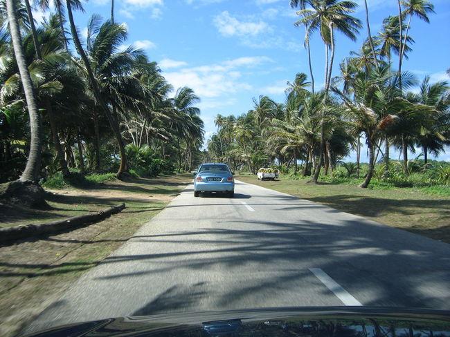 Car Left Driving Manejando Palm Trees Palmeras Port Of Spain Road Trinity