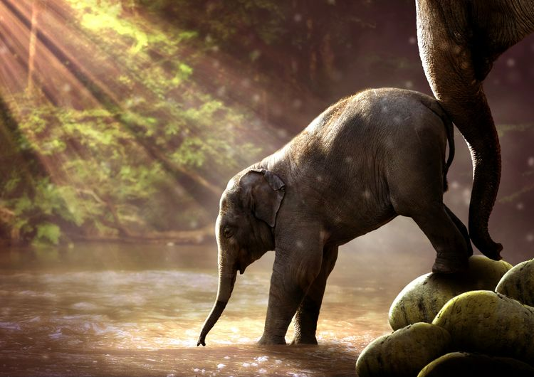 Elephants Animal Animal Wildlife Water Outdoors No People Mammal Nature Animals In The Wild Elephant Day African Elephant Young Elephants Baby Elephant Family Animal Photography River Landscape Young Elephant Wildlife Photography Wildlife Elephants Animal Themes One Animal Young Animal Young