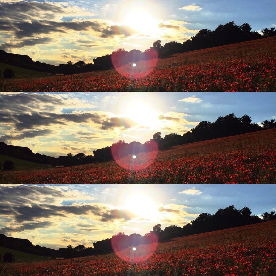 Poppies  Beauty In Nature Nature Fields Flowers Sunset Sun Beauty Scenery Taken in Chesham United Kingdom First Eyeem Photo