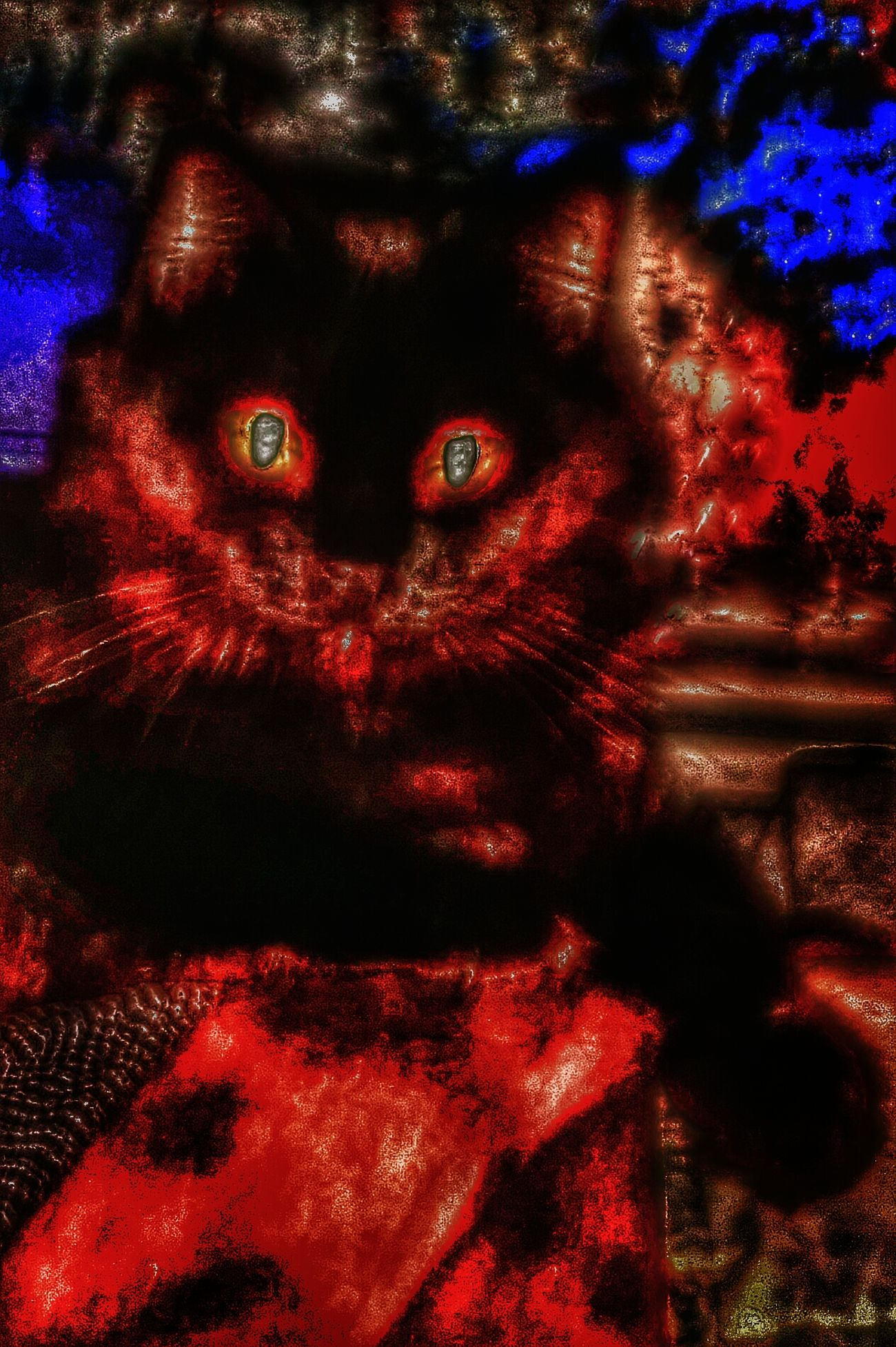 Kiki with a lot of special effects One Animal Animal Themes Domestic Animals Domestic Cat Black Color For The Love Of Photography Black Cat Photography Cat Black My Love Black Cat Head Shot Special Effects