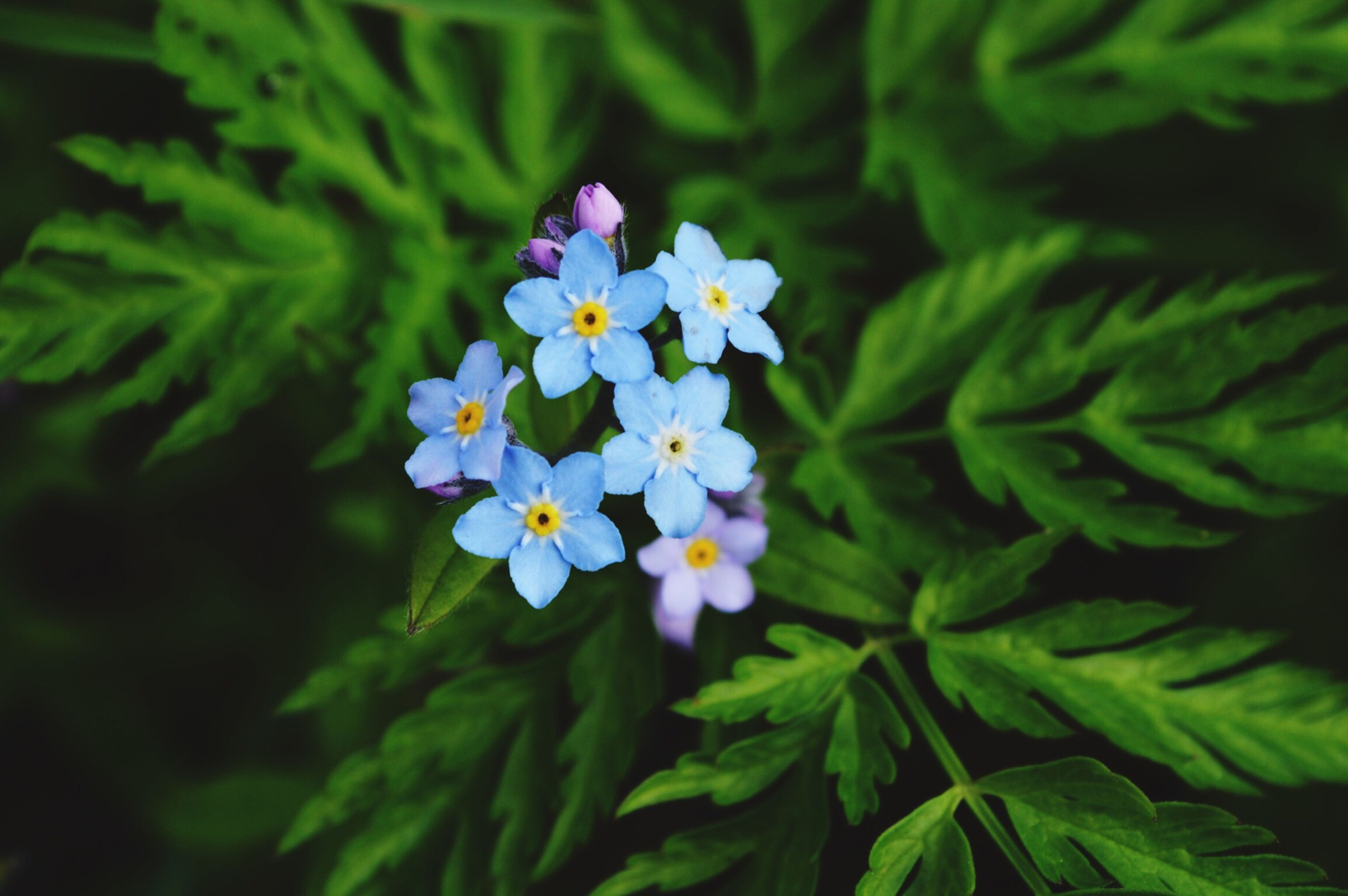 flower, freshness, growth, fragility, petal, beauty in nature, flower head, blooming, leaf, plant, green color, nature, close-up, purple, in bloom, focus on foreground, white color, high angle view, park - man made space, blossom
