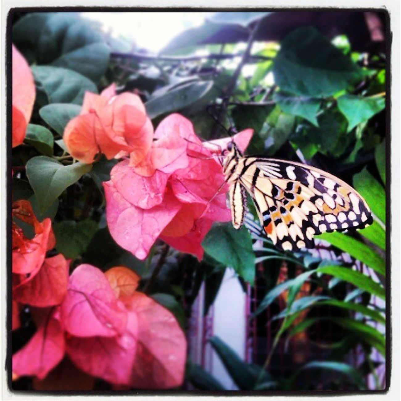 Butterflyflyaway Flower Butterfly