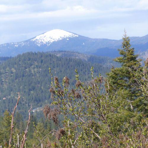 Mountain Nature Mountain Range Pine Tree EmNewHere