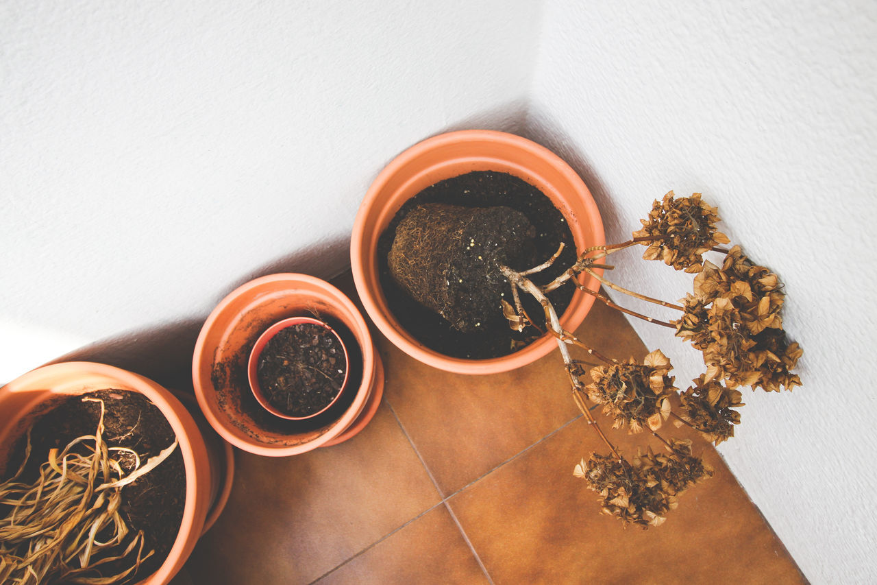 Dry plants on pots Color Image Copy Space Day Dead Flowers Dead Plant Dry Dry Leaves Dry Plants Floor Floor Tiles Flowerpot High Angle View Horizontal Hydrangea No People Plants Plants And Flowers Pot Potted Plant Still Life Tile Tiled Floor