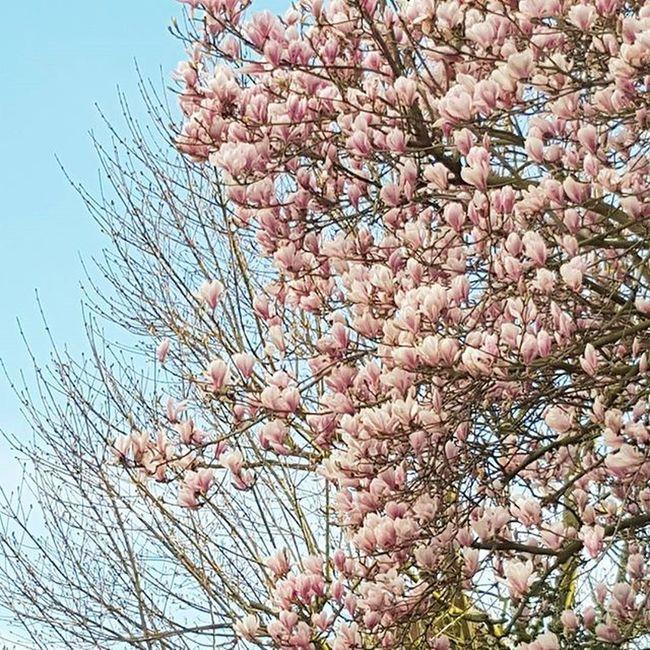 / Einfach mal anhalten & geniessen. 😊🌸 Naturpur Frühlingsgefühle Frühlingimherzen Love Truelove Heartundso Girlswithheart