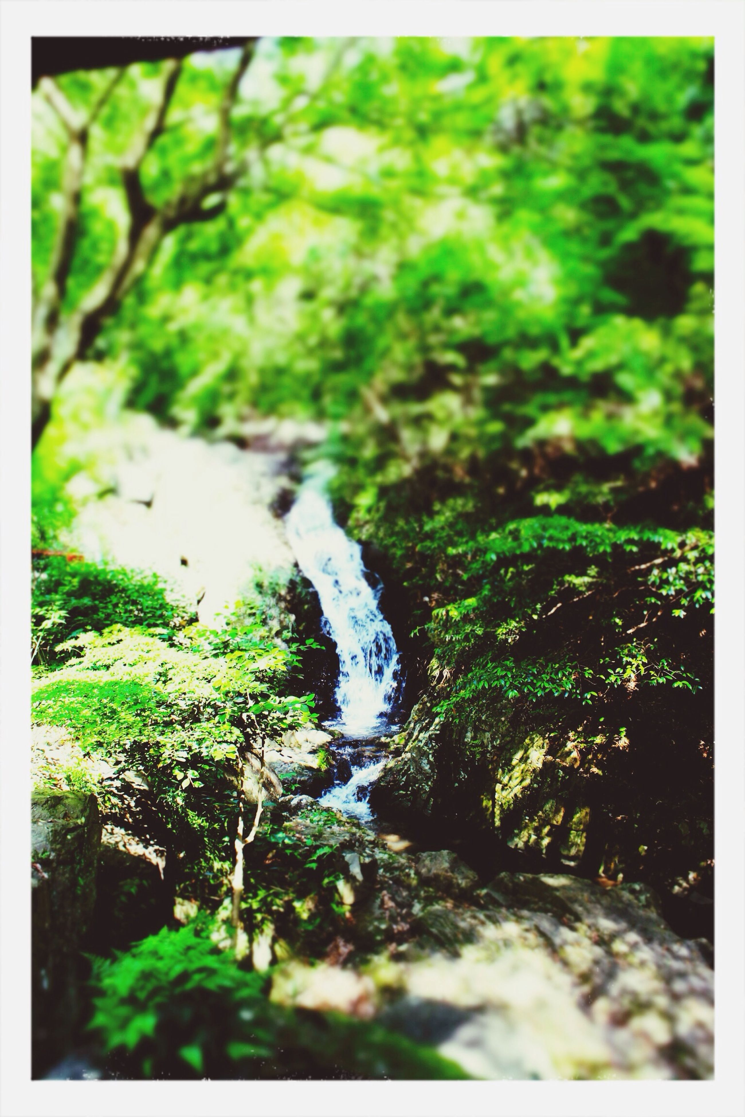 transfer print, auto post production filter, forest, growth, nature, selective focus, moss, plant, green color, water, stream, tranquility, beauty in nature, rock - object, day, grass, outdoors, close-up, no people, tree