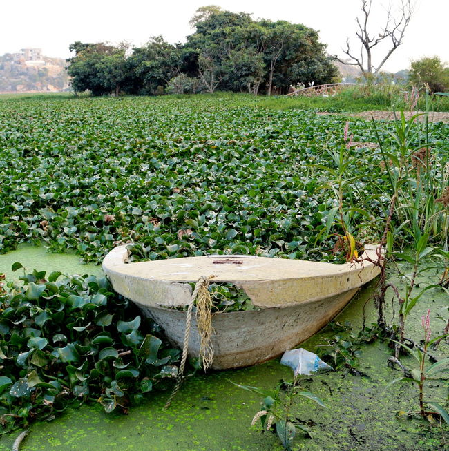 The best may go in vain ,when unidentified... Boat Nature Photography Green Trash Cool Landscape BhushnamPhotography EyeEm Best Shots Sony