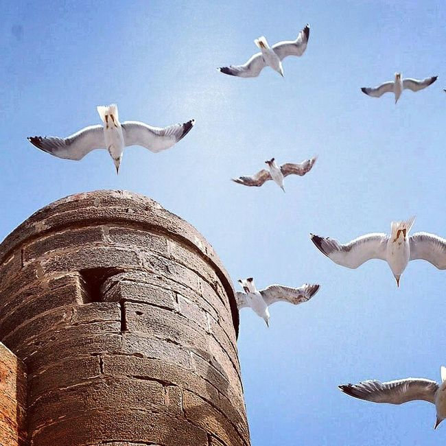 Essaouira Maroc by : My talented friend: Lahcen Māazouz .Essaouira Maroc Morocco Maroc ❤️ Gnaoua Gnawa Gnawa Music Seabird