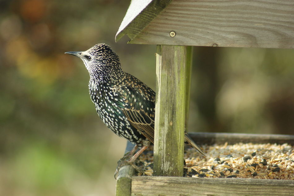 Beautiful stock photos of woodpecker,  Animal Themes,  Animal Wildlife,  Bird,  Close-Up