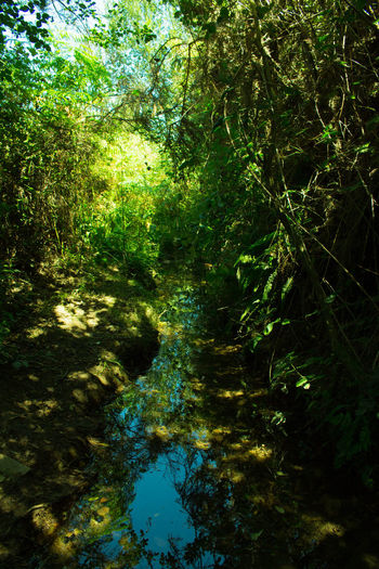 Green Color Forest Jungle Nature Outdoors River Tree Water The Week On EyeEm Perspectives On Nature