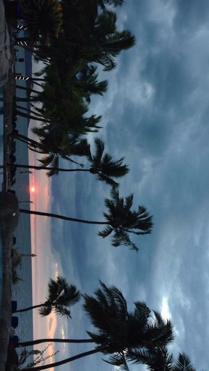 Beautiful Fiji sunset Palm Tree Tree Low Angle View Sky Cloud - Sky Silhouette Outdoors Tree Trunk Growth No People Nature Day Beauty In Nature Connected By Travel