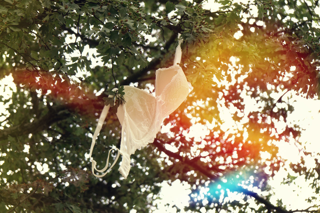 Bra Branch Concept Conceptual Day Emancipation Feminism Freedom Hanging Light Leak Low Angle View Nature No People Outdoors Summer Sun Flare Tree