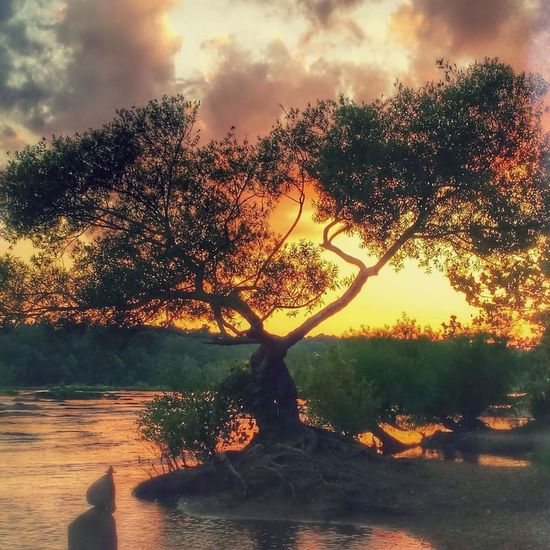 Outdoors Water Tranquility Tree Beauty In Nature