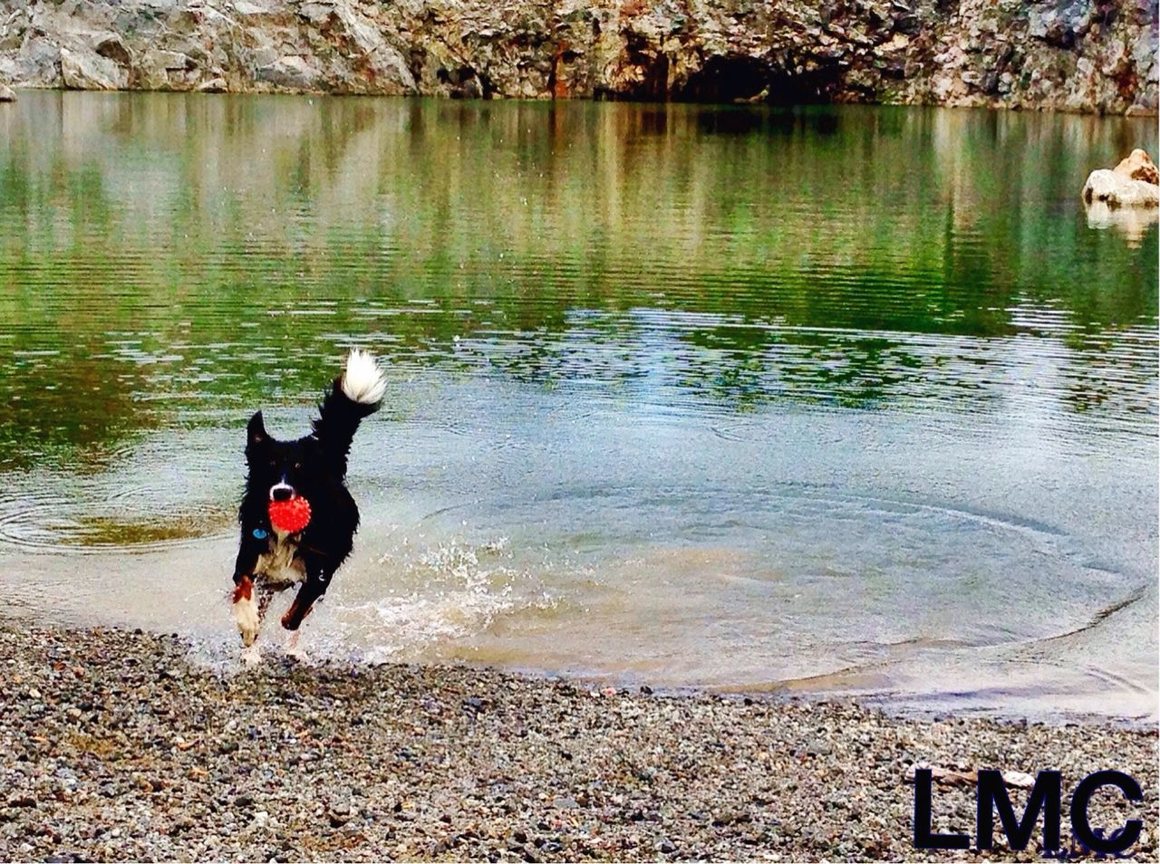 dog, pets, domestic animals, animal themes, one animal, water, mammal, black color, nature, outdoors, day, no people