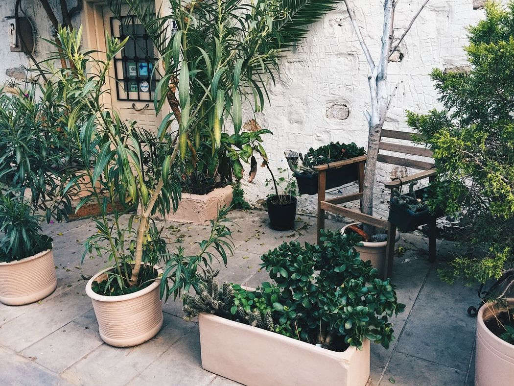 Architecture Building Exterior Built Structure Day Growth Nature No People Oasis In The City Oasis In Town Outdoors Plant Potted Plant Riad Like Garden Tree