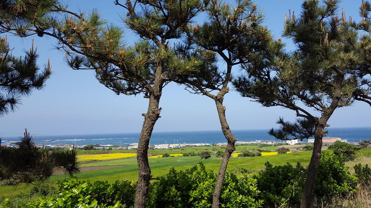 JEJU ISLAND  Korea Tranquility Hello Nature Trees Landscape_photography Ultimate Korea Paisaje Natural