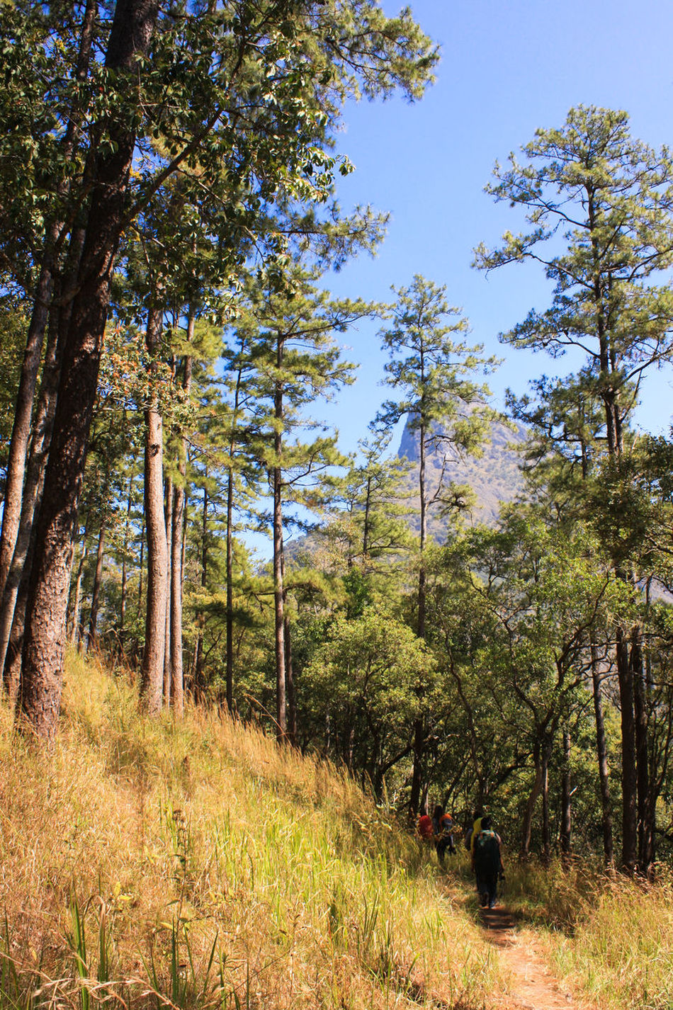 on walking. Blue Sky Camping Chaingmai Doi Luang Doi Luang, Chiang Dao Green Hiking Mountains Moutain Outdoor Thailand Tree Trees Trekking