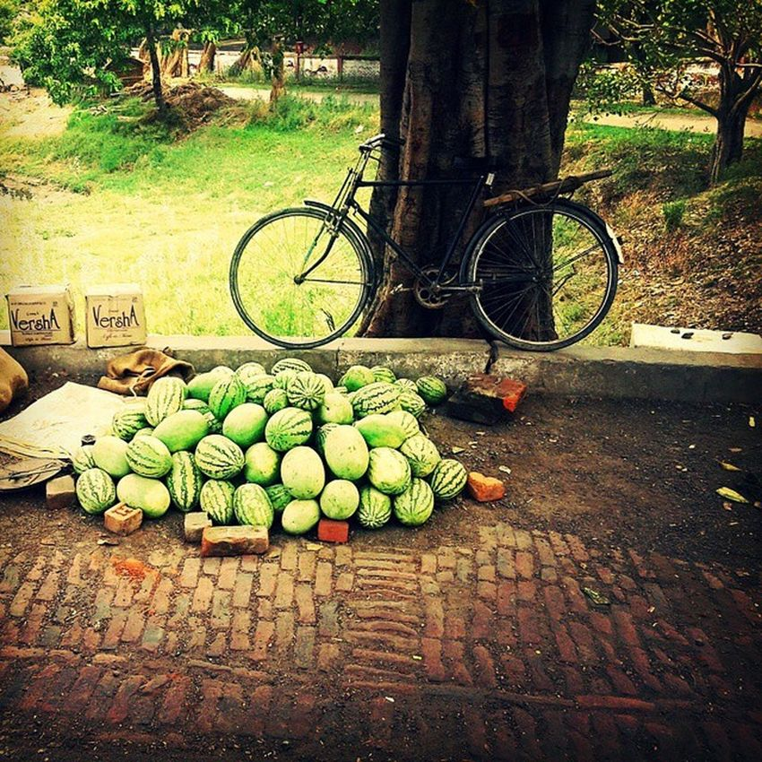 Vendor missing.. Indian Village Glimpse WaterMELONS Bicycle Old Strong Tree Trunk Marsh Background Summer Window Click UttarPradesh Memories Samsunggalaxycore 5 Megapixel Peace Vibrance Silence _soi Indiapictures Indiatravelgram