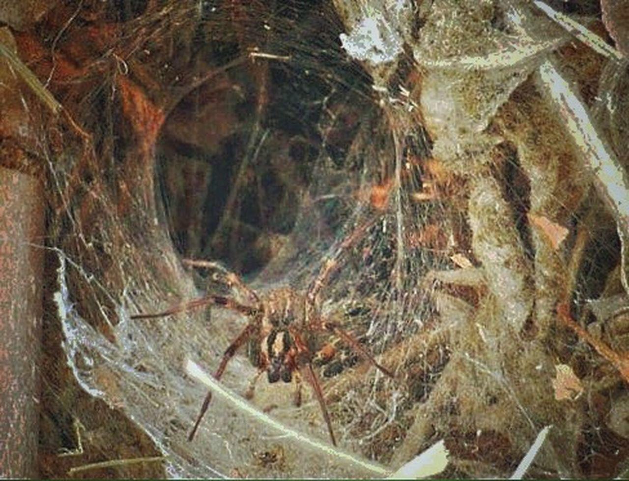 Spider Spiderweb Spider Web Macro Nature Spider Series Arachnid Arachni-therapy Arachnophobia Macro Photography Arachnipocalypse