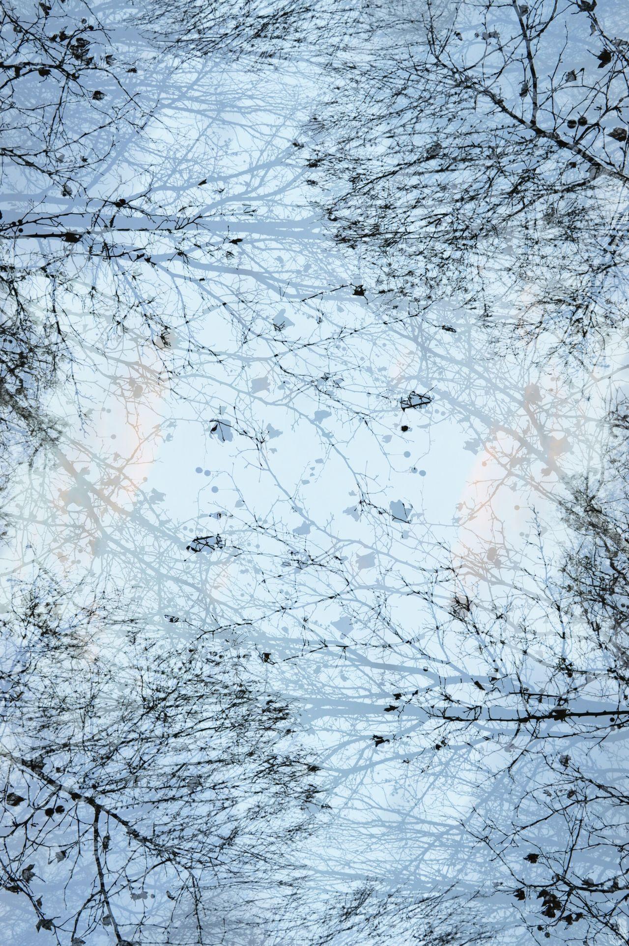 Naturelover #simplebeauty #treebranchees #treemagic #trees #treesilhouette Beauty In Nature Nature Sky