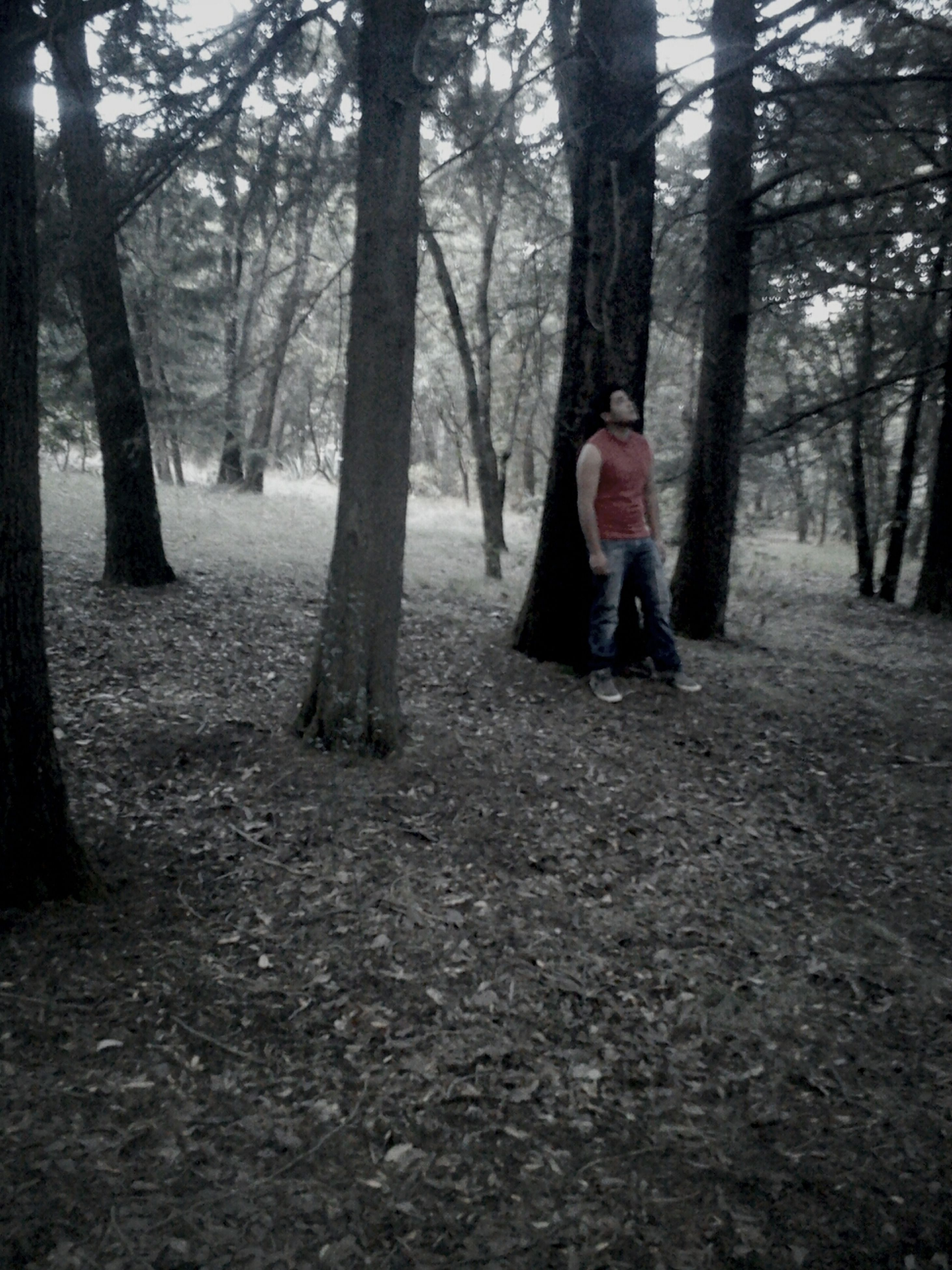 tree, lifestyles, tree trunk, leisure activity, forest, casual clothing, full length, person, woodland, front view, standing, young adult, nature, day, warm clothing, park - man made space, outdoors, looking at camera