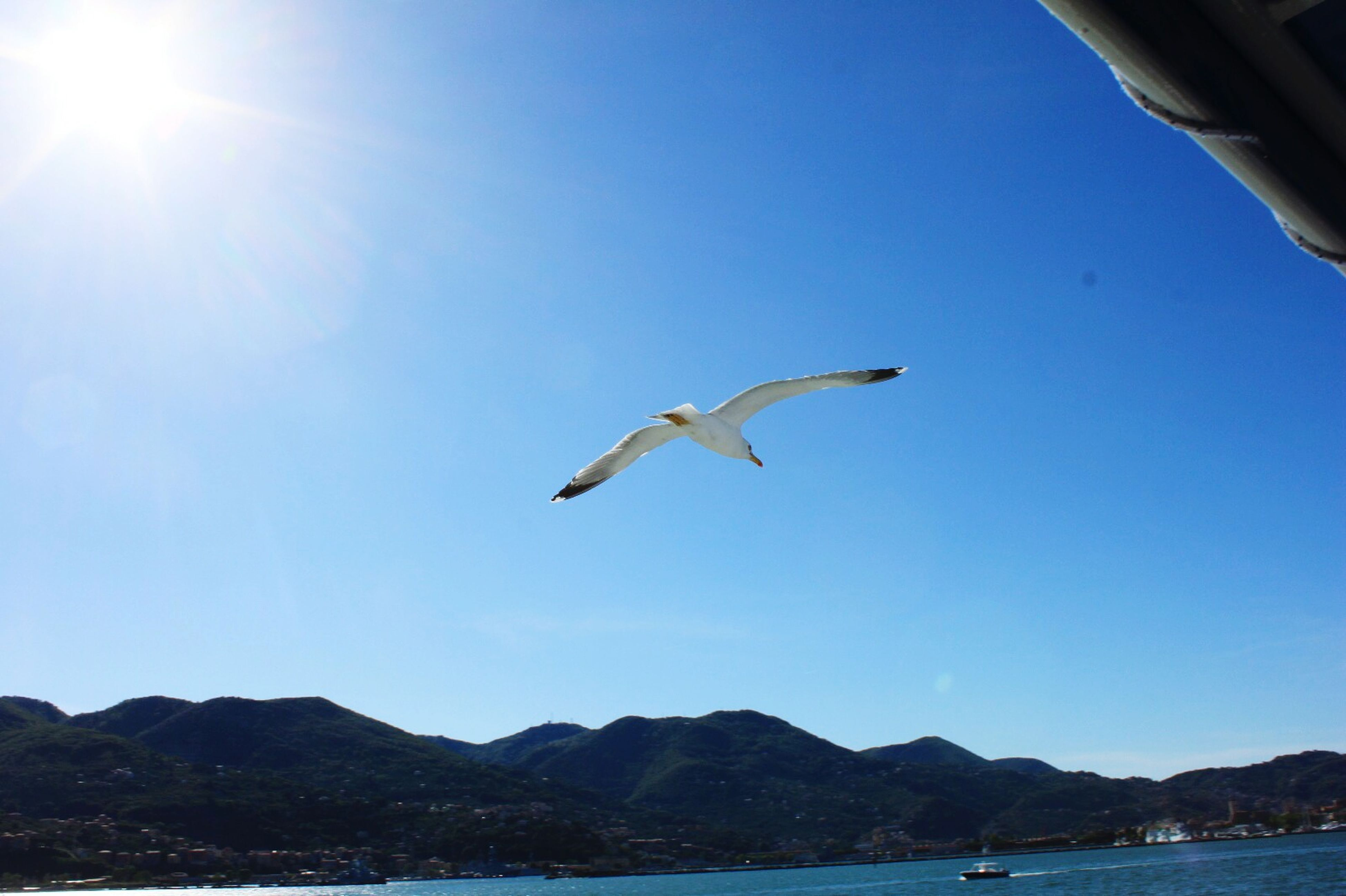 bird, flying, animal themes, animals in the wild, clear sky, water, spread wings, wildlife, mid-air, one animal, seagull, sea, mountain, blue, copy space, nature, mountain range, tranquil scene, beauty in nature, sky