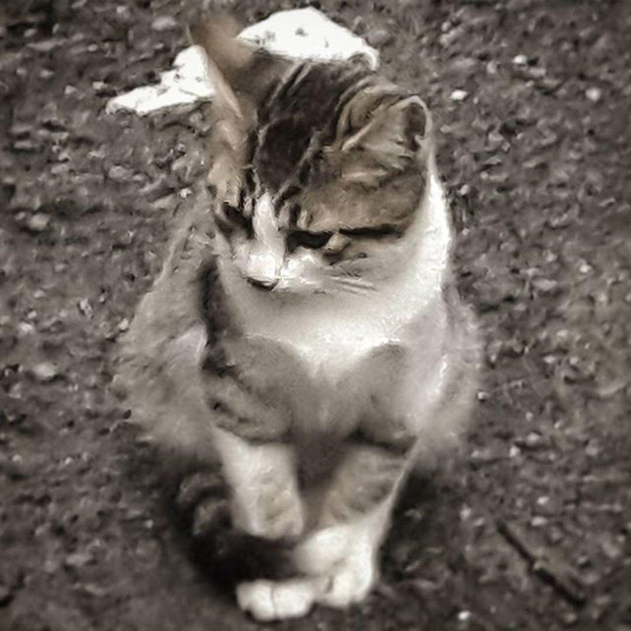 Cat Catstagram Animal Lovers Animal Cats_arround Love Lovely Cute Love_animals Cats_of_instagram Cats Animallover Kitty Kitten Save_animals Savethenature YouAreNotAlone Wearenotalone Instagram_turkey Instadaily Insta_people Instamood Instalike Instagram Instagood insta lightsout life citylife Beauty