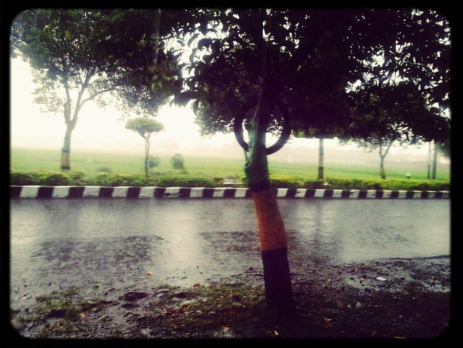 Hard Rains