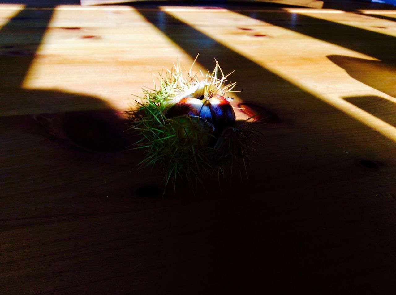 Table Wood - Material Spiked No People Indoors  Animals In The Wild Animal Themes Close-up Day Nature Chestnut Sun Golden