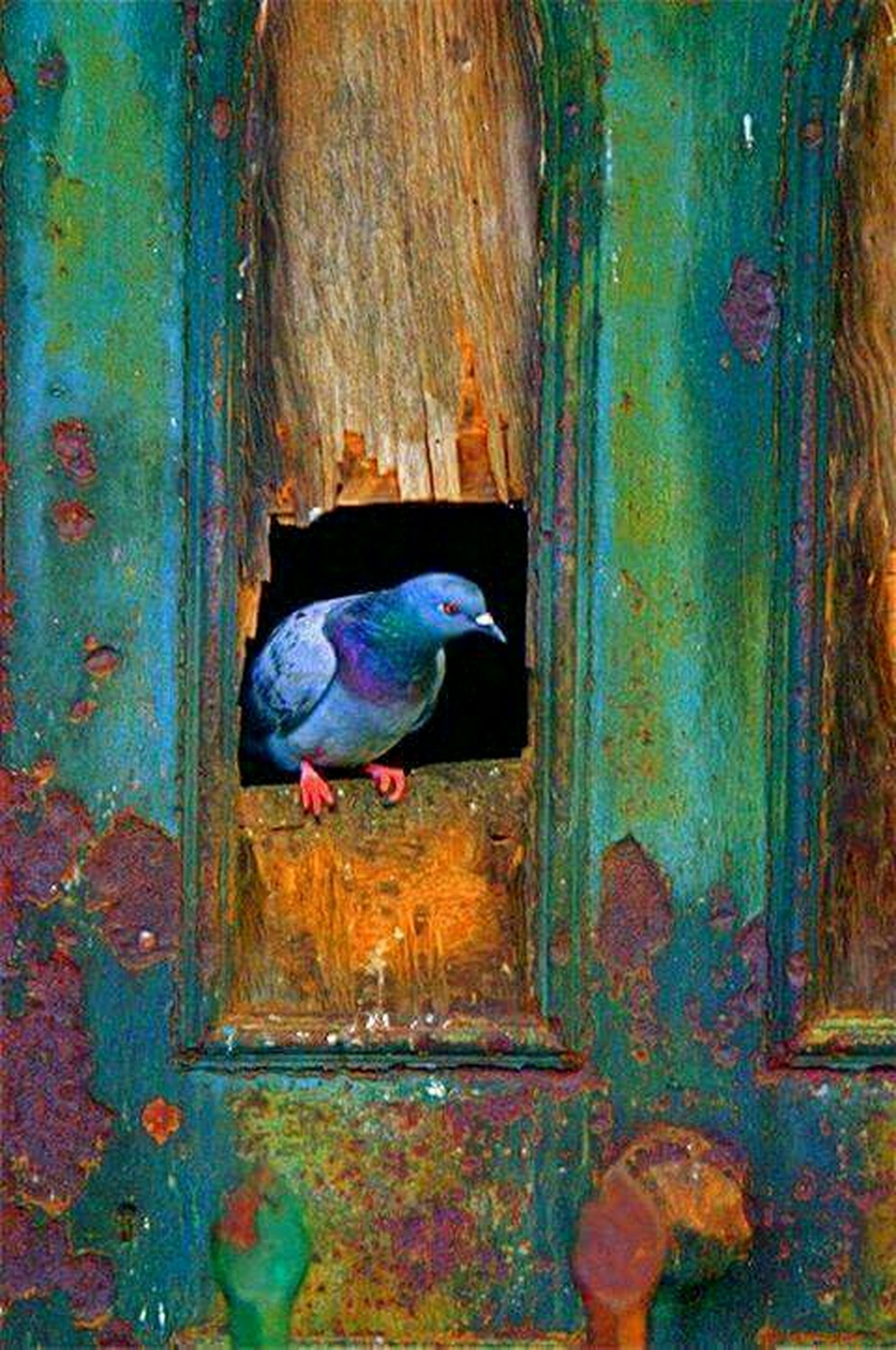 blue, weathered, abandoned, old, deterioration, run-down, damaged, door, wood - material, obsolete, built structure, bad condition, wall - building feature, outdoors, day, close-up, one person, rusty, wall