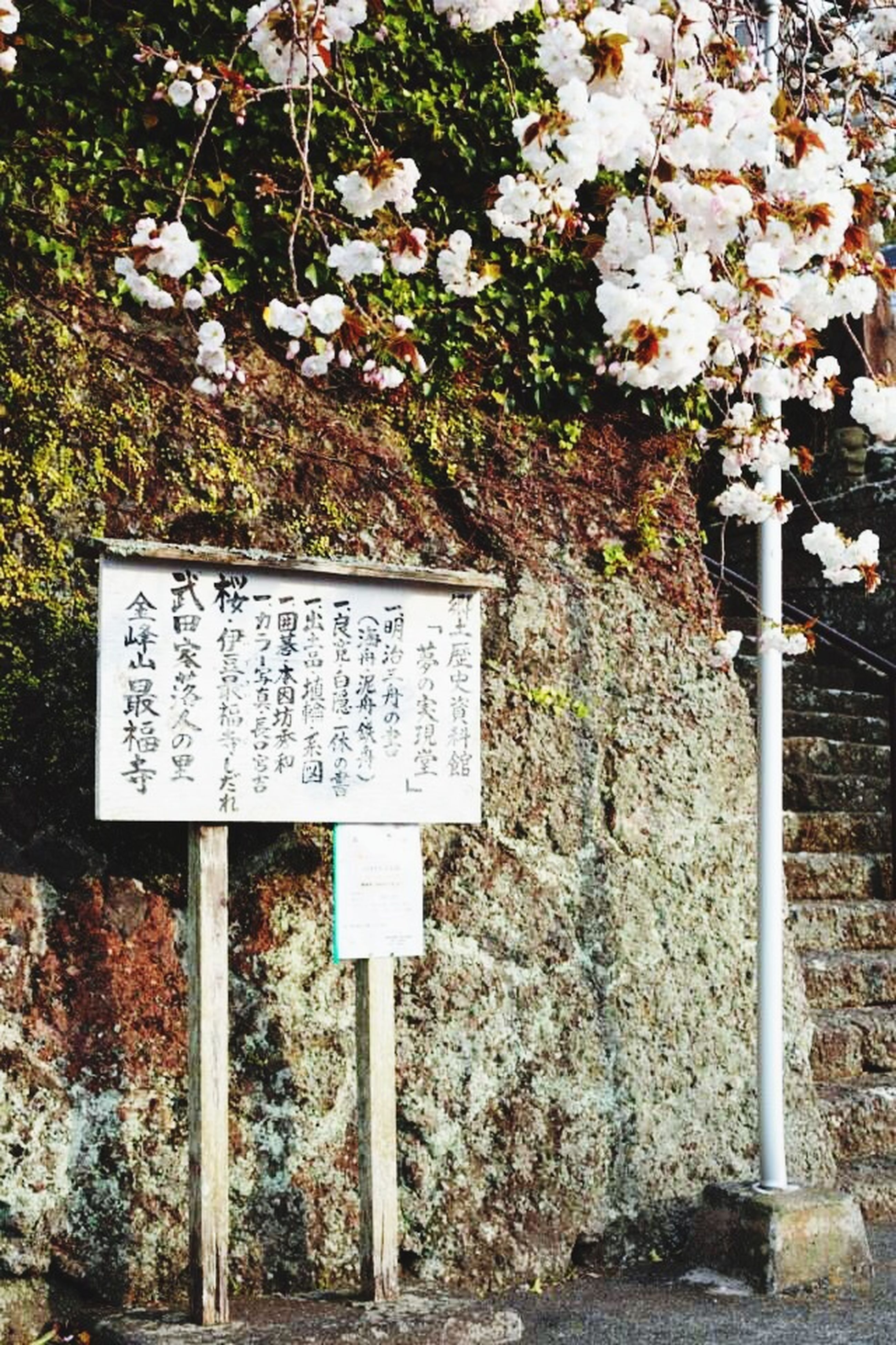text, communication, western script, flower, plant, growth, sign, day, outdoors, white color, nature, no people, leaf, non-western script, guidance, tree, information sign, wall - building feature, information, high angle view