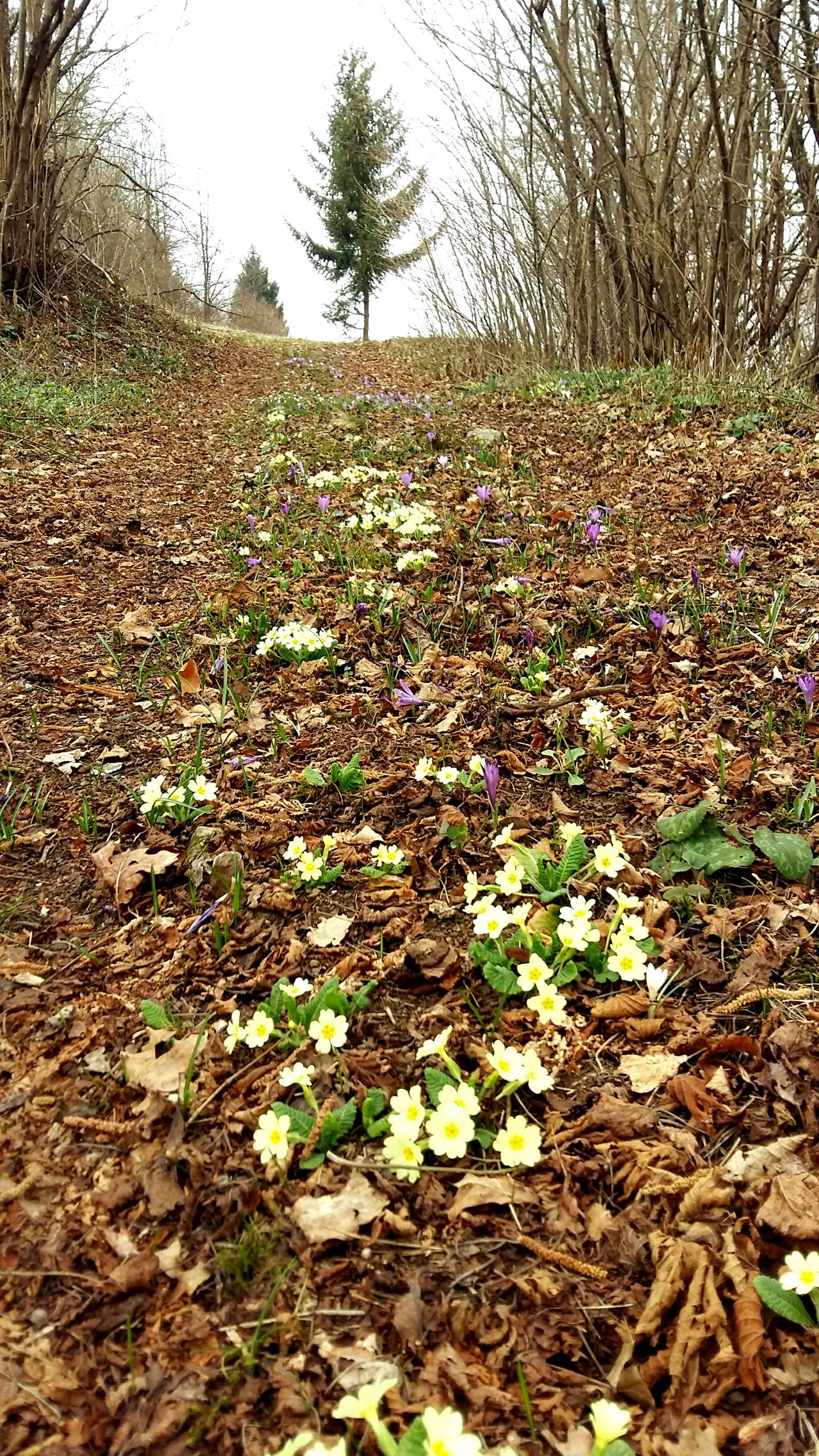 Nature Growth Beautiful Day Beauty In Nature Plant Hiking Trip Nature Photography Beauty In Nature Outdoors Flower Field No People Flowers Way Primroses Primrose