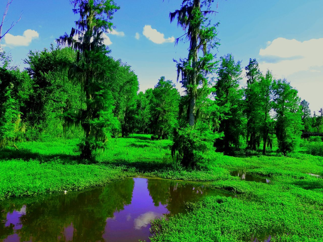 Phinizy beauty Filtered Swamp Nature Trees And Sky Trees Mystic Relax Tranquil