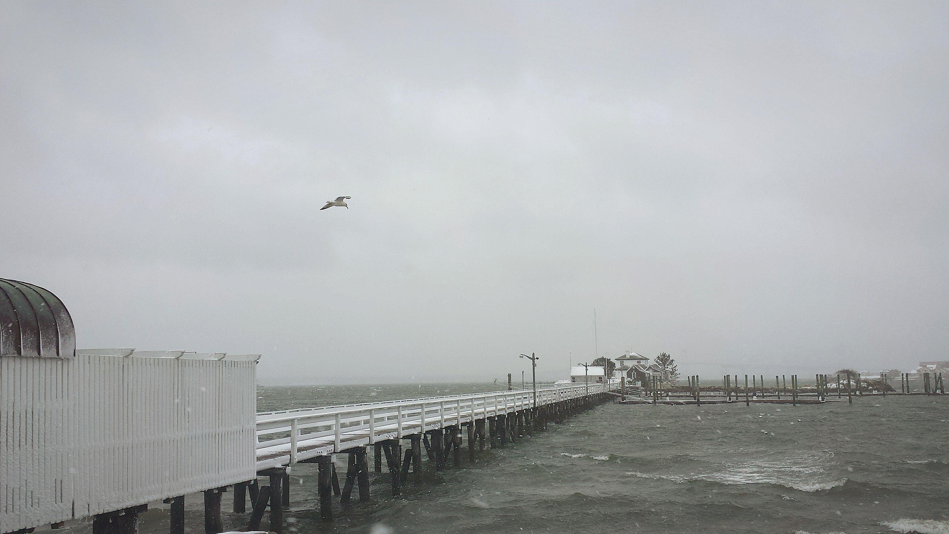 Newport RI Stormy Weather Seagull Pell Bridge