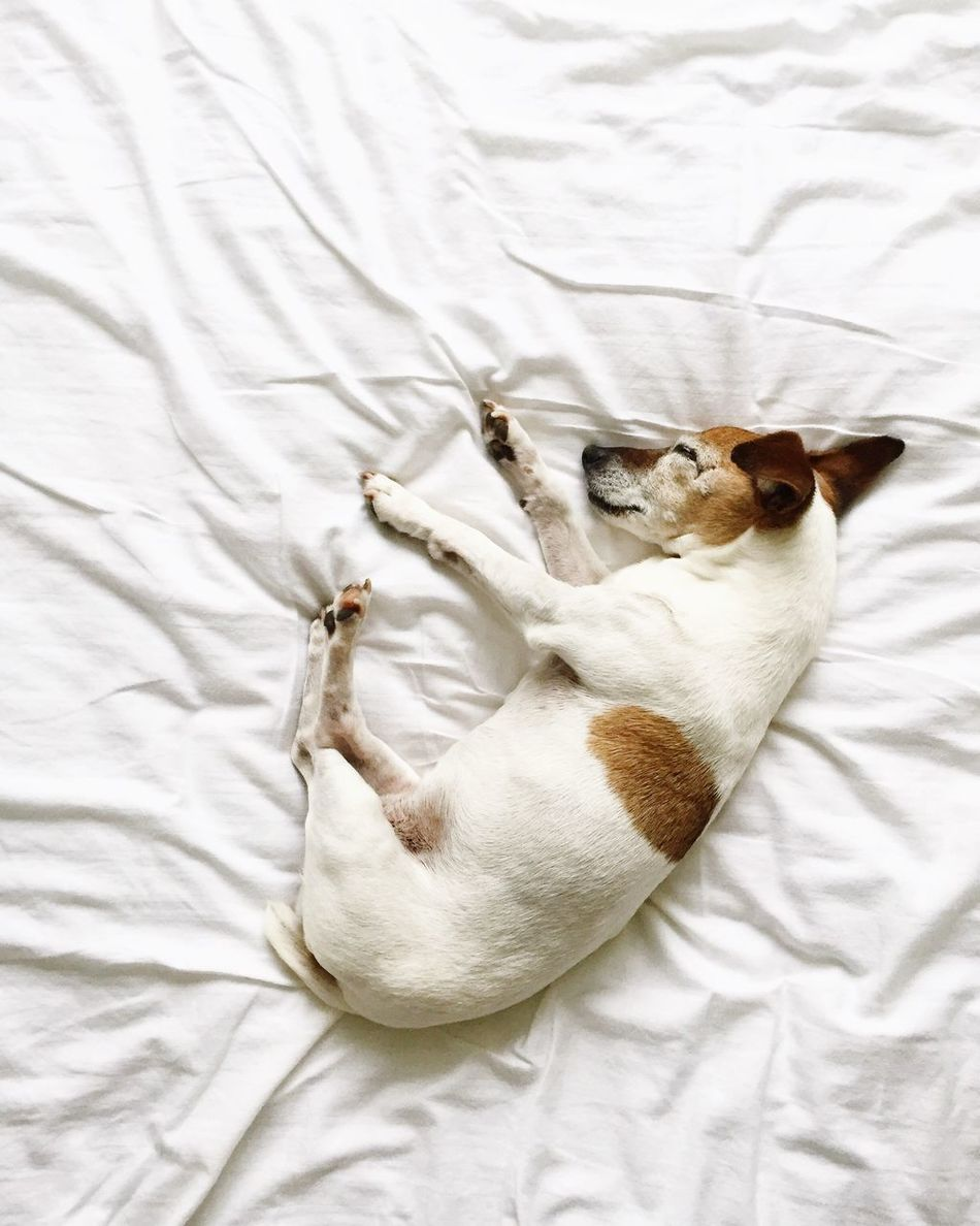 Beautiful stock photos of nacht, Animal Themes, Bed, Dog, Domestic Animals