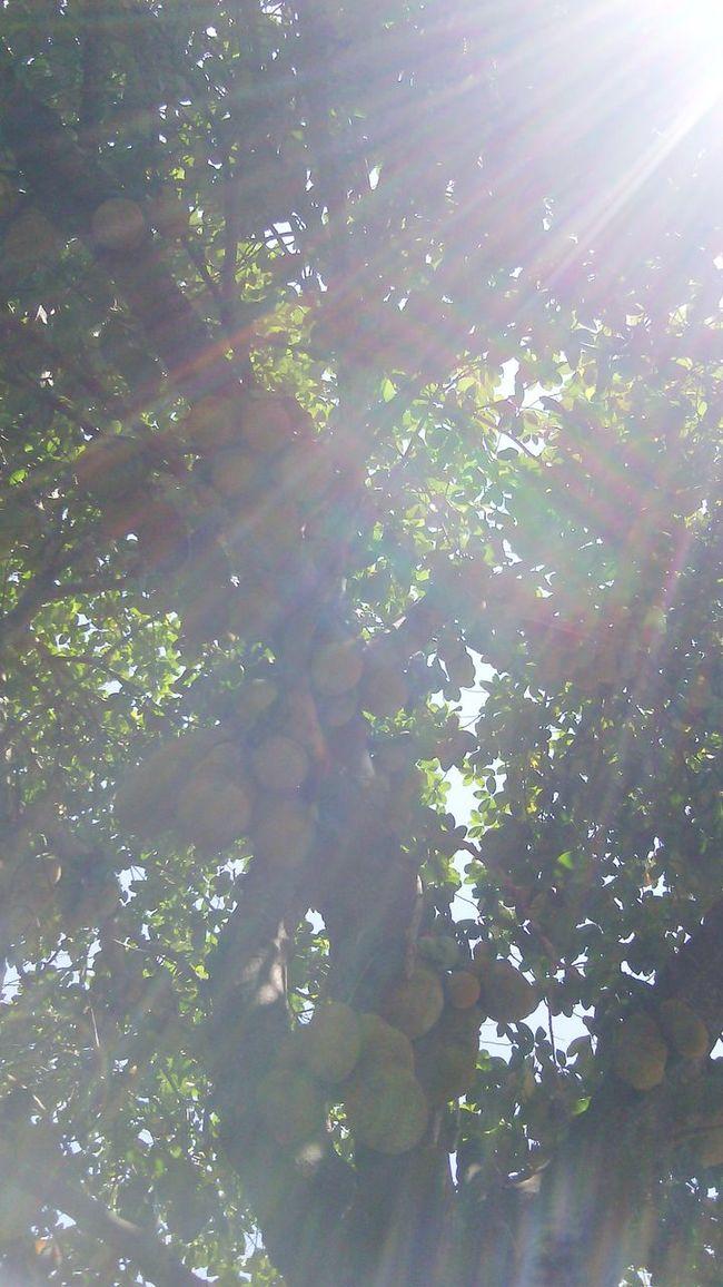 Nature_collection Nature Photography Sun_ Collection Nature_ Collection  Sol Raiosdesol RaiosSolares Popular NaturezaMaravilhosa